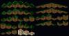 Sporbs_forest_tileset1.PNG
